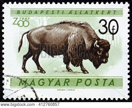 Hungary - Circa 1960: A Stamp Printed In Hungary Shows American Bison, Bison Bison, Are Large Ungula
