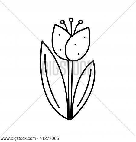 Flower Plant Tulip Doodle Line Art Design. Black Monochrome Icon Element. Isolated On White Backgrou