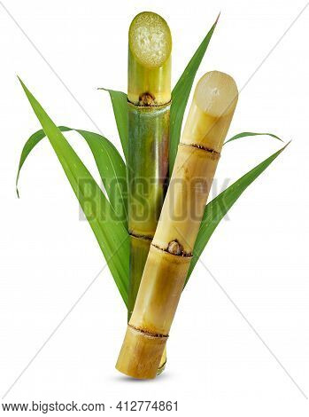 Single Object Of Sugar Cane Isolated On White Background