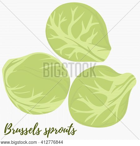 Brussels Sprouts, Vector. Heads Of Cabbage On A White Background. Green Vegetables, Food.
