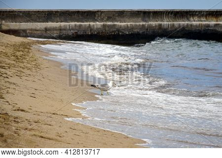 Seagull On Deserted Beach Stands At Water's Edge. Waves Run On Sandy Beach. In Background Is Pier, B