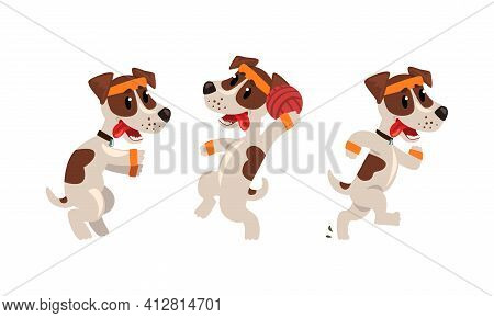Cute Sportive Jack Russell Terrier Running And Playing Ball Vector Set