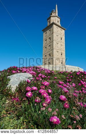 View Of The Tower Of Hercules And Beautiful Foreground Of Purple Flowers And Green Foliage On A Spri