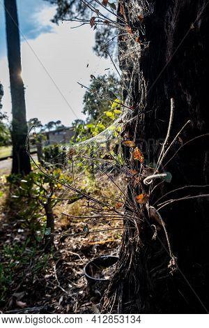 Spider Web On A Tree Trunk Shining In Birght Sunlight