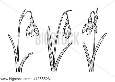 Snowdrops Outline Set. Vector Hand-drawn Illustration In Line Art Style. Sketches Of Spring Flowers.