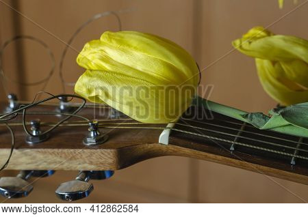 Fading Flowers And An Acoustic Guitar. Yellow Tulips Lie On The Fingerboard Of The Guitar. Fading Po