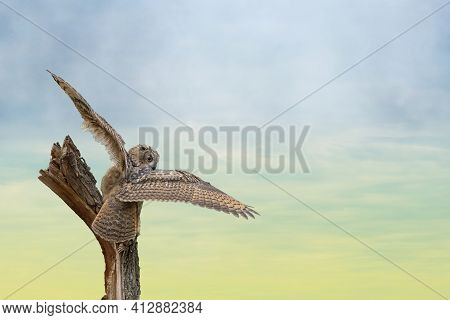 Eurasian Eagle Owl, Bubo Bubo, A Large Species Of Eagle Owl. Sit On A Stump. Spread The Wings For Ta