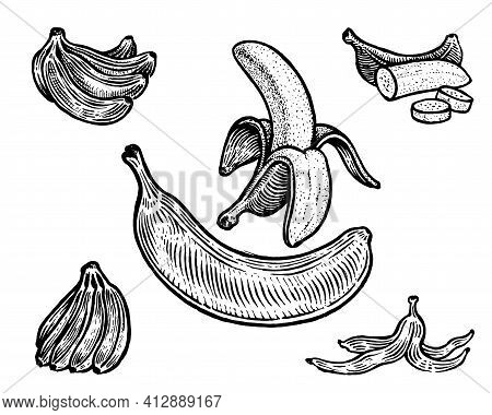 Bananas, Vector Illustration. Vintage Graphics And Handwork. Drawing With An Ink Pen And Pencil. The