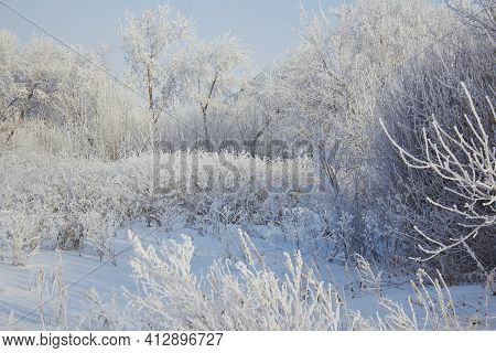 In The Photo A Cold Winter Trees And Bushes Covered In Snow And Frost. A Lot Of Snow And Snowdrifts