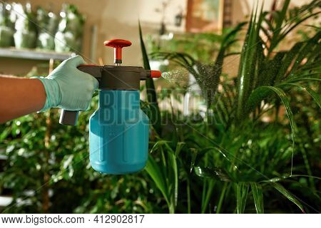 Womans Hand Watering The Plantation At Home. Home Garden Concept. Female Hand In Gloves Take Care Of