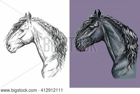 Realistic Head Of Friesian Horse. Vector Black And White And Colorful Isolated Illustration Of Horse