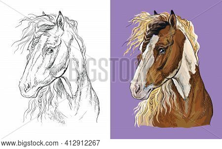 Realistic Head Of Pinto Horse. Vector Black And White And Colorful Isolated Illustration Of Horse. F