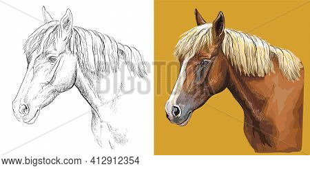 Realistic Head Of Young Chestnut Horse. Vector Black And White And Colorful Isolated Illustration Of