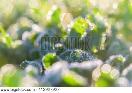 Abstract Green Background Of Bokeh Grass, Frost. The Concept Of An Early Fresh Morning, The First Fr