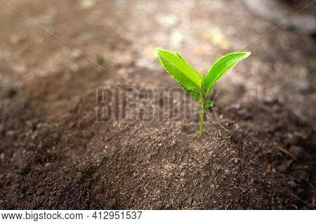 Seedlings That Grow In Complete Soil. Soil Integrity. Seedlings In Dry Soil. Concept Of Global Warmi