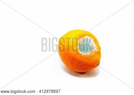 Rotting Orange Close Up Shot Isolated On White Background, Space For Text.