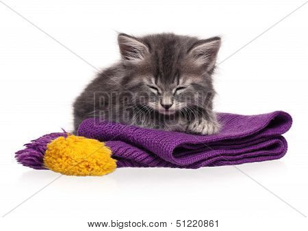 Cute asleep kitten on a warm knitted scarf isolated on white background poster