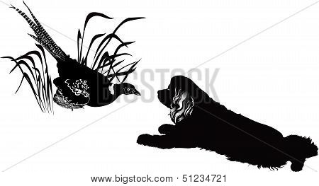 bird pheasant and the American Cocker Spaniel meeting poster