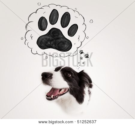 Cute black and white border collie thinking about a paw in a thought bubble above her head poster