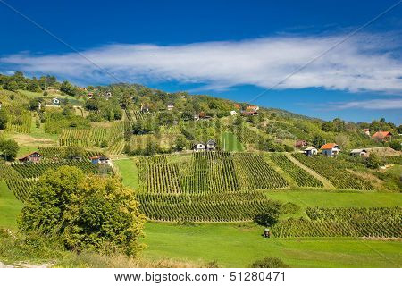 Idyllic Green Hill Vineyards Area