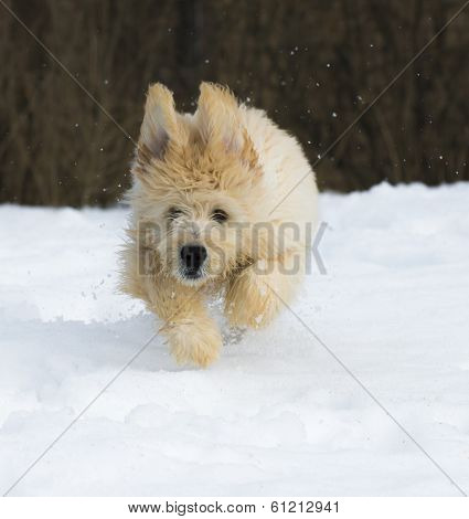 Puppy In The Snow
