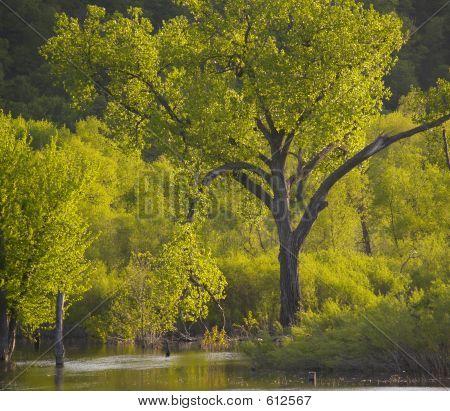 Psalm 1 Tree