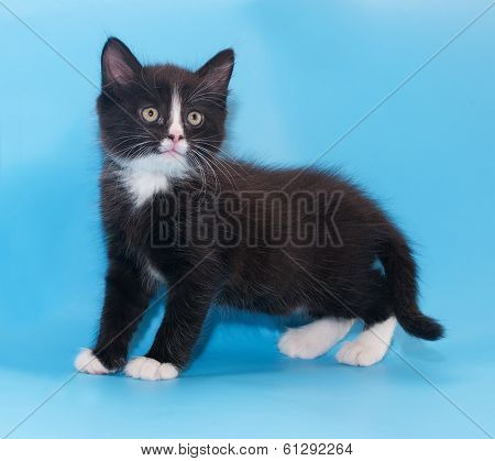 Black And White Fluffy Kitten Worth Warily Looking Up