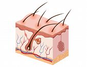 illustration of human skin tissue is complete and exciting poster