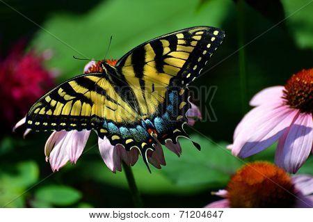 Butterfly on a flower petal