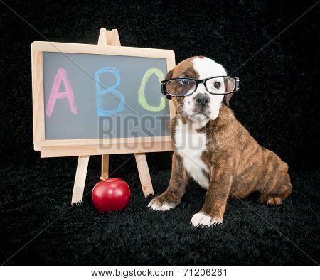 Back To School Puppy