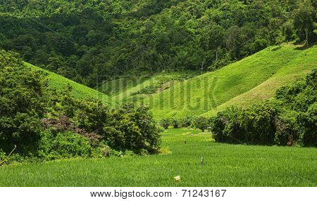 Agriculture On Hight Mountain