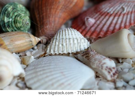 Sea Shells On Rock Background