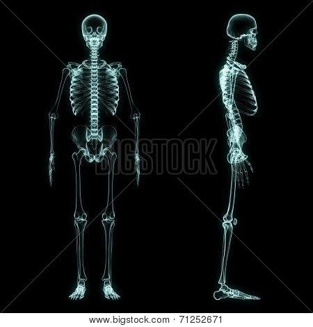 X-ray Full Body Of Skeleton