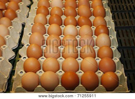 Farm fresh brown chicken eggs at farmers market