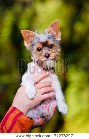 adorable puppy outdoors