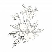 Bunch of anemones and buttercups, hand drawn poster
