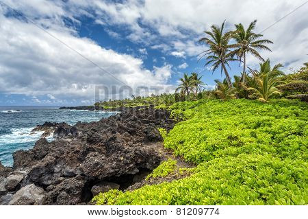 Tropical Landscape On Maui