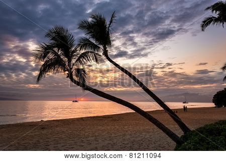 Coconut palm trees at sunset on maui