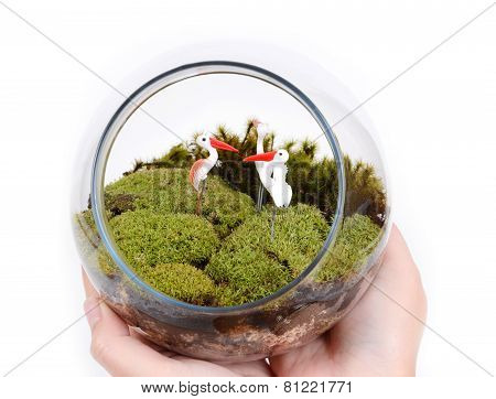 Terrarium In Hands.