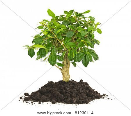 plant tree growing seedling in soil isolated on white background