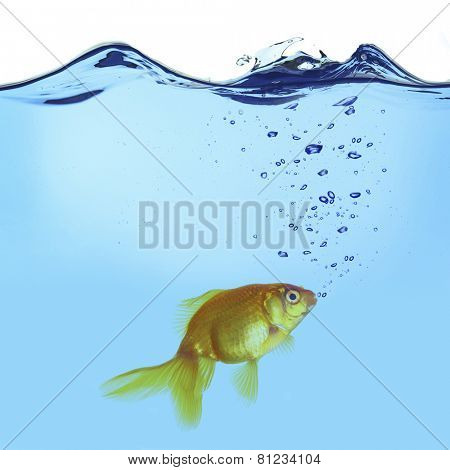 Goldfish in water