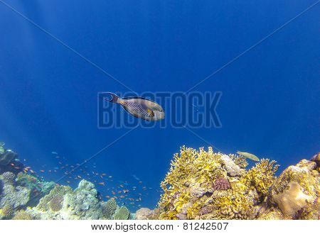 Coralreef_3