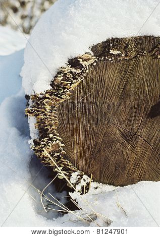 Old Stump In The Snow Winter Scene Close-up Background