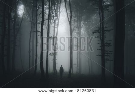 Dark scary forest with fog on Halloween