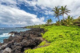 Tropical Landscape On Maui