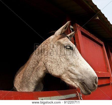 Horse Show In Denmark