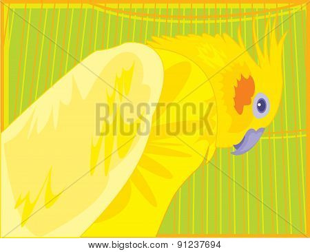 Bright Colored Cockatiel Parrot Sitting In A Cage