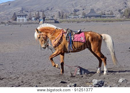 Horse At The Foothills Of Bromo Volcano In Indonesia