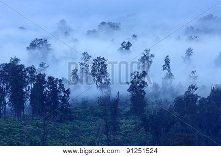 Trees In The Fog, Ijen Volcano, Indonesia