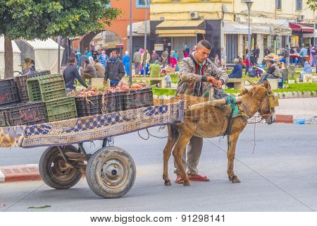 EL JADIDA, MOROCCO, APRIL 5, 2015: Local man arrange harness of his donkey while he transports onions on donkey powered cart